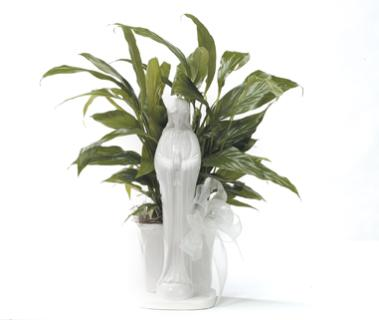 Virgin Mary Peace Lily